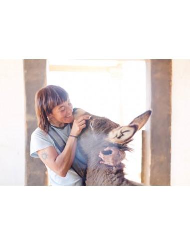 Donkeys' care and basic handling course