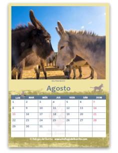 Pack of Calendars 2021