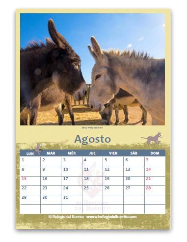 Pack de Calendarios 2022